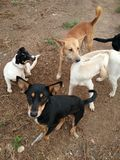 группа в составе собранные собаки Стоковые Изображения