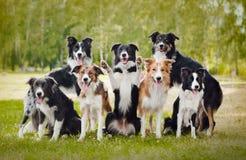 Группа в составе счастливые собаки стоковая фотография rf