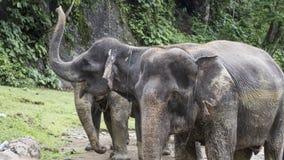 Группа в составе счастливые слоны Стоковые Изображения RF