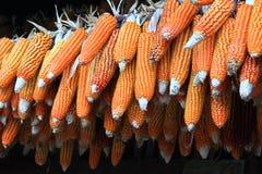 Группа в составе сырцовые corns стоковое изображение