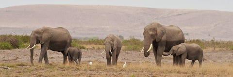 Группа в составе слоны Стоковые Изображения RF