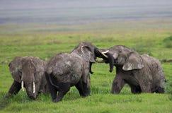 Группа в составе слоны в саванне вышесказанного Кения Танзания serengeti Maasai Mara стоковое фото