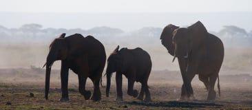 Группа в составе слоны идя на саванну вышесказанного Кения Танзания serengeti Maasai Mara стоковые изображения