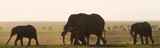 Группа в составе слоны идя на саванну вышесказанного Кения Танзания serengeti Maasai Mara стоковая фотография rf