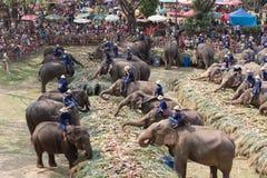 Группа в составе слон есть плодоовощ Стоковое Изображение RF