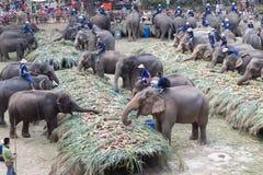 Группа в составе слон есть плодоовощ Стоковые Изображения
