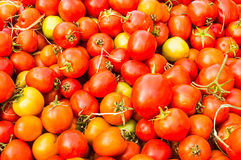 Группа в составе томаты Стоковое Изображение RF