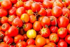 Группа в составе томаты Стоковое Изображение