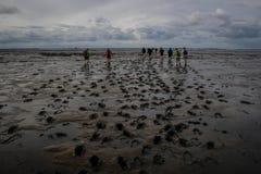 Группа в составе туристы идет вдоль морского дна во время отлива от Голландии к острову выходя следы ноги в грязь стоковые фотографии rf