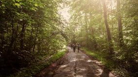 Группа в составе туристы идя через дорогу леса стоковое изображение rf