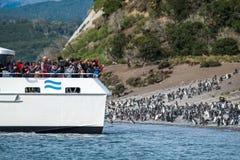 Группа в составе туристы фотографирует пингвины Стоковые Фото