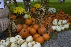 Группа в составе тыквы других цветов Штат хеллоуина стоковые фото