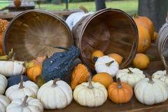 Группа в составе тыквы других цветов Штат хеллоуина стоковое фото