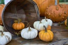 Группа в составе тыквы других цветов Штат хеллоуина стоковые изображения