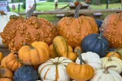 Группа в составе тыквы других цветов Штат хеллоуина стоковое изображение rf