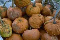 Группа в составе тыквы других цветов Штат хеллоуина стоковые изображения rf