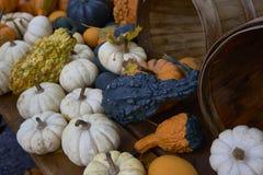 Группа в составе тыквы других цветов Штат хеллоуина стоковое фото rf