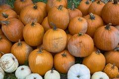 Группа в составе тыквы других цветов Штат хеллоуина стоковые фотографии rf