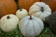 Группа в составе тыквы других цветов Штат хеллоуина стоковая фотография rf