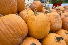 Группа в составе тыквы других цветов Штат хеллоуина стоковая фотография
