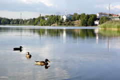 Группа в составе утки в заливе Töölönlahti, Хельсинки Стоковые Изображения