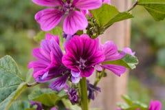Группа в составе фиолетовые полевые цветки стоковое изображение