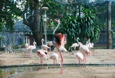 Группа в составе фламинго Стоковые Фотографии RF