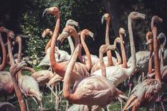 Группа в составе фламинго с длинными шеями и красивым оперением Стоковые Изображения RF