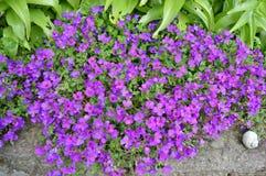 Группа в составе цветки Стоковое Изображение RF