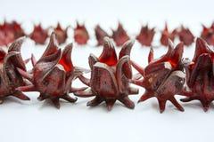 Группа в составе цветок 001 roselle Стоковое Изображение RF