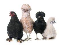 Группа в составе цыпленок стоковое фото