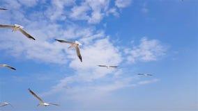 Группа в составе чайки летает против ветра, неба на заднем плане акции видеоматериалы