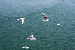 Группа в составе чайки Стоковое Фото