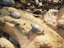Группа в составе черепахи на камне стоковое изображение rf