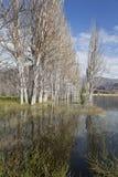 Группа в составе чуть-чуть деревья в озере около Potrerillos. Стоковое фото RF
