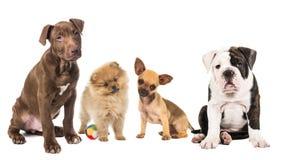 Группа в составе щенята от различной породы Стоковая Фотография