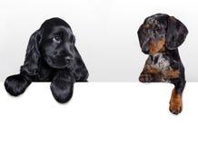 Группа в составе щенята различных пород Стоковое Фото