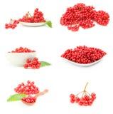 Группа в составе ягоды красного guelder розовые Стоковое Фото