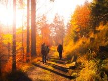Группа в составе backpackers trekking на дороге в лесе осени Стоковые Фотографии RF