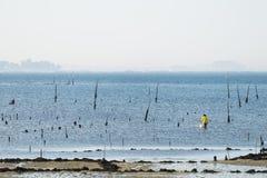 Группа в составе clams сбора моллюска стоковые фотографии rf