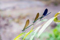 Группа в составе dragonflies на лист Стоковые Изображения