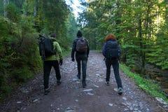 Группа в составе hikers на следе Стоковое Фото