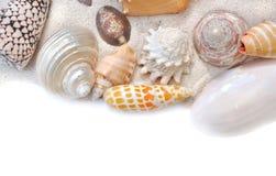 Группа в составе seashells на песке Стоковые Изображения RF