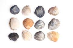 Группа в составе seashells Стоковые Изображения RF