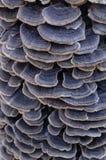 Группа гриба несъедобная на пне Красивая предпосылка в масштабе Стоковая Фотография RF