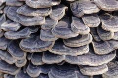 Группа гриба несъедобная на пне Красивая предпосылка в масштабе Стоковые Изображения