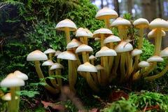 Группа гриба растя на дереве Стоковое Изображение RF