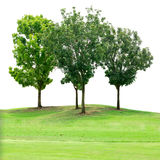 Группа дерева на поле травы изолированном на белизне Стоковое Изображение RF
