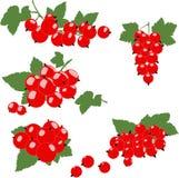 Группа красной смородины с зелеными листьями Стоковая Фотография RF