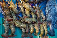 Группа креветки Стоковое Изображение RF